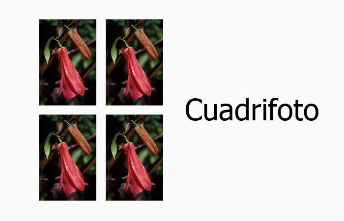 Impresión de 4 Fotos 3x4cm ideales para documentación
