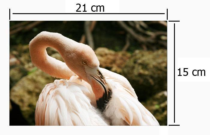 Impresión de Fotografías Digitales 15x21cm